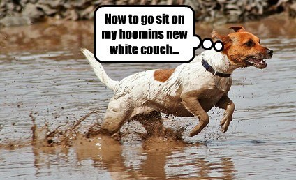 dogs,couch,mud,white,sit,caption