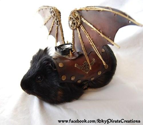 cute guinea pig pirates - 8286547712