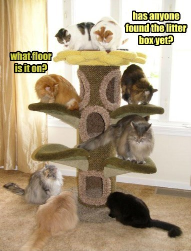 Image result for cat in cat tree meme""