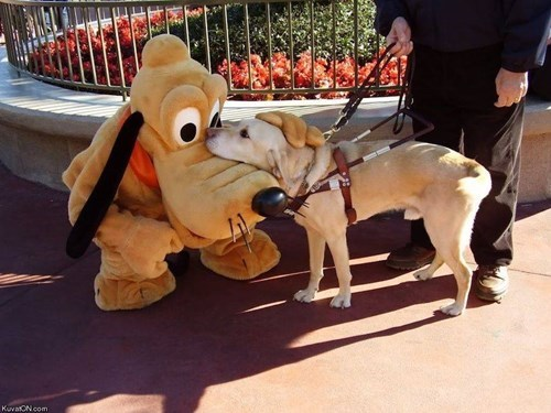 dads,dogs,disney,pluto,cute