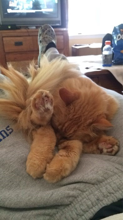 cute napping Cats - 8286579456