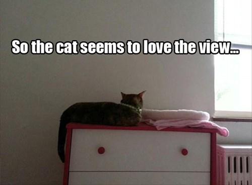 Cats wall funny