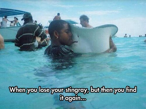 stingray,funny,lost