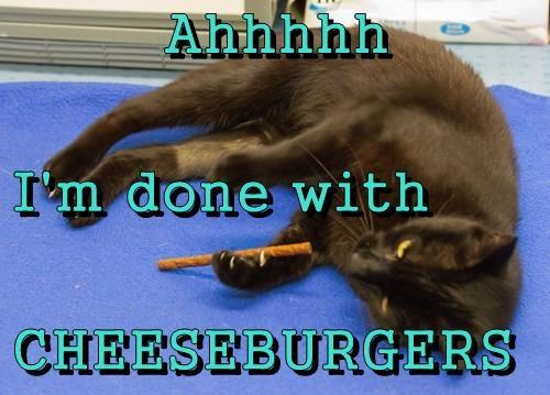 Cheezburger Image 8287365120