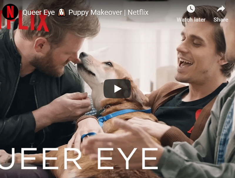 puppy queer eye rescue dog makeover - 8287493