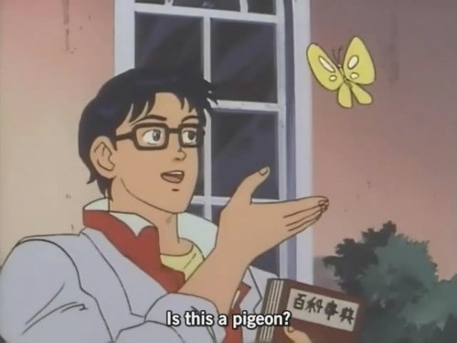 wtf pigeon butterfly anime - 8287750144