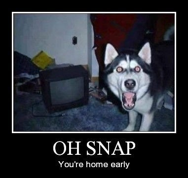 dogs wtf snap funny - 8287874816