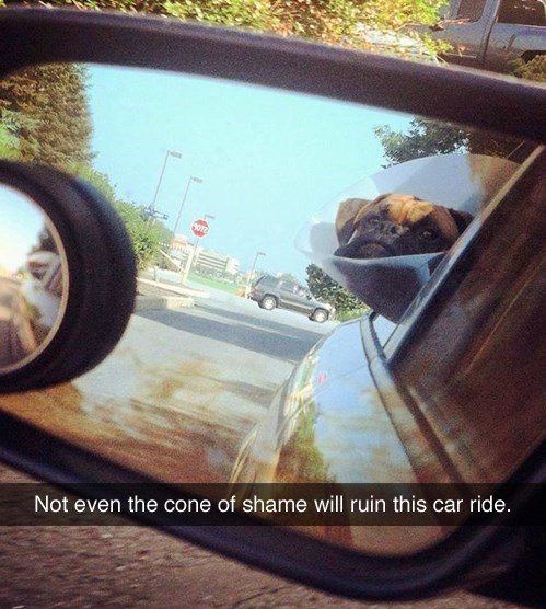 dogs cone of shame car ride funny