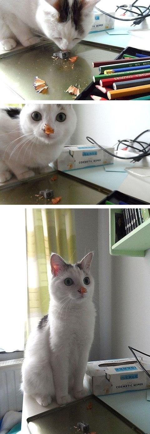 Cats funny embarassing - 8287922944