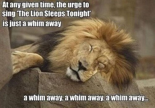 lions Music funny - 8287925760