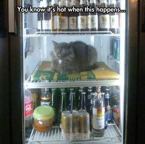summer,Cats