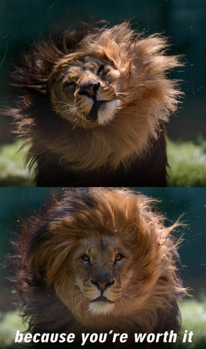 lions,shampoo
