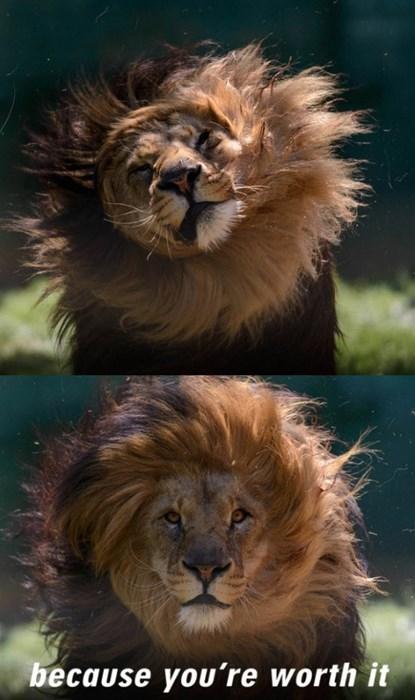 lions shampoo - 8287937536