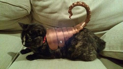 costume,Cats