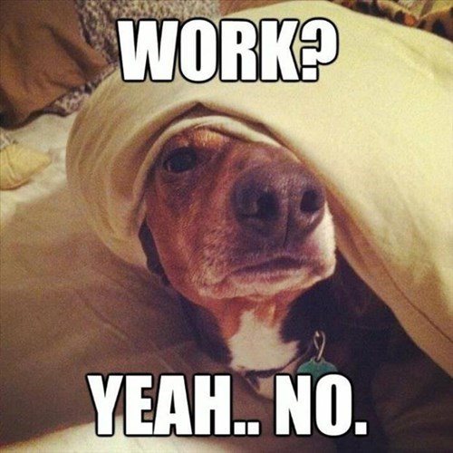 dogs,tired,work