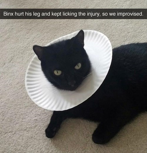 cone of shame Cats - 8288098560