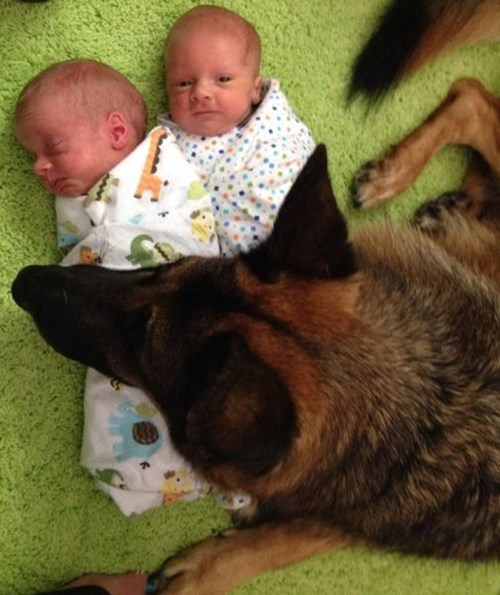 dogs baby cute parenting - 8288110848