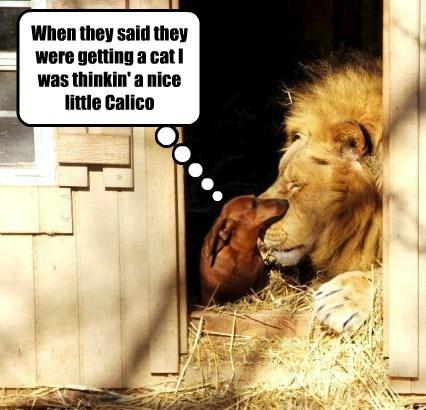 lions,dogs,whoa