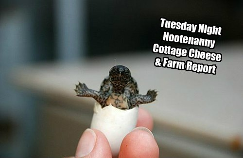Tuesday Night Hootenanny Cottage Cheese & Farm Report