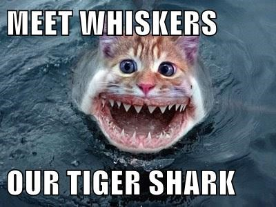 scary tigers sharks Cats weird - 8288491520