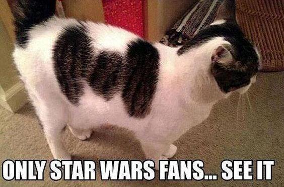 star wars funny cats Cats cat memes - 8288517