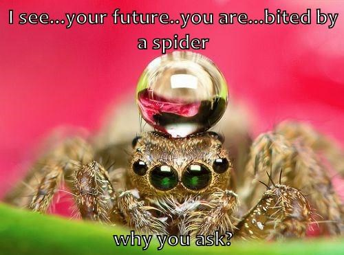 I see...your future..you are...bited by a spider why you ask?