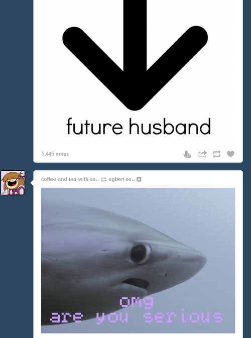 tumblr,sharks