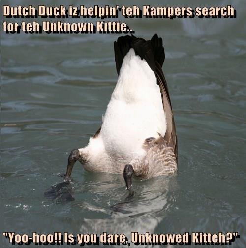 ducks Cats - 8288975104