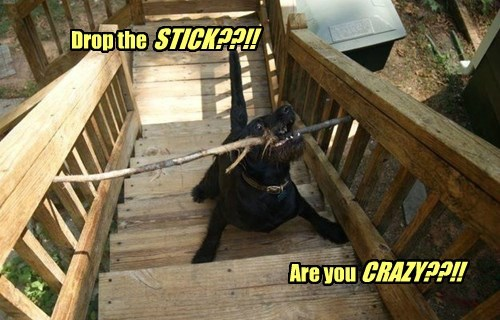 Drop the STICK??!! Are you CRAZY??!!