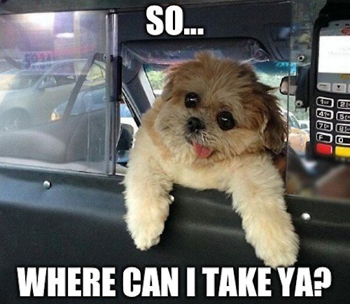 dogs,taxis,derp