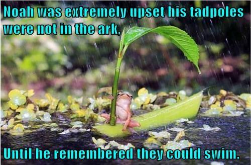 noahs ark boats frogs - 8289137152