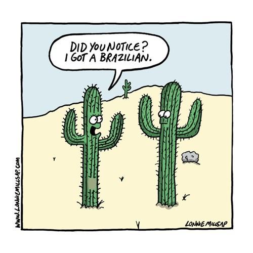 brazilian hygiene cactus web comics - 8289149184