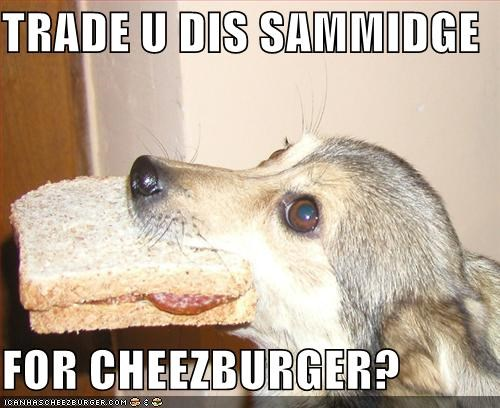 Cheezburger Image 828925184