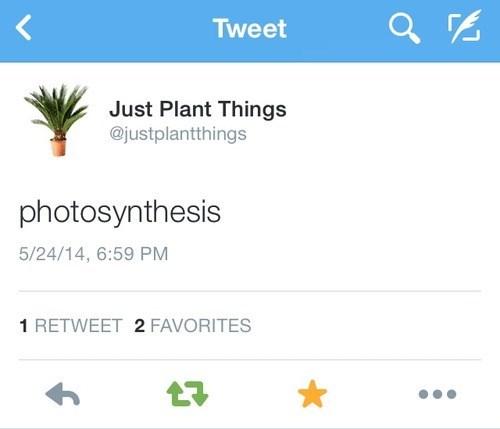 twitter,plants
