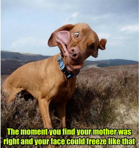 dogs face right mother caption freeze - 8289326848