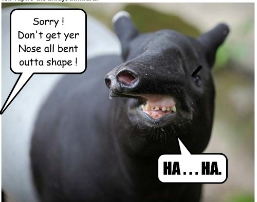 pig,puns,weird