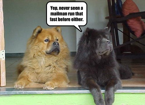dogs chow chow mailman - 8289840640