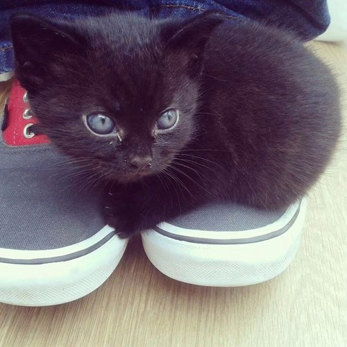 kitten,feet,cute,walking