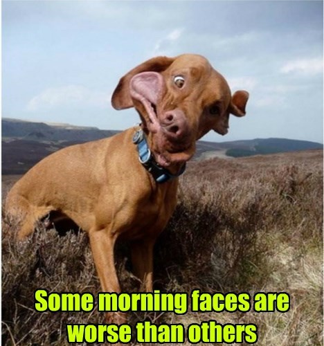dogs cute funny faces - 8290270976