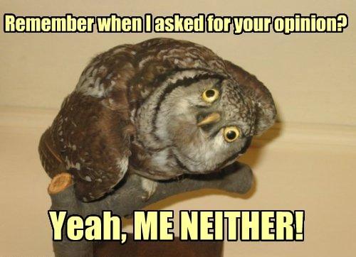 annoyed birds owls funny - 8290360064