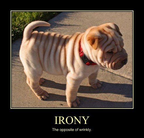 dogs cute wrinkle irony - 8290366720