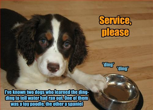 dogs service noms - 8290367744