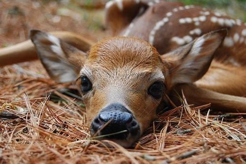 annoyed fawns cute deer squee sleeping