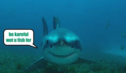 Meme of a shark smiling at the camera with a speech bubble saying 'be careful what you wish for' implying the 'big fish' wish.