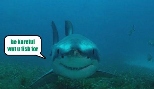 sharks,fish,funny