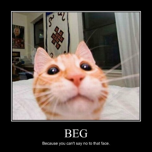 begging Cats funny - 8291013376