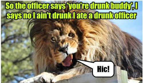 Funny big cat meme of a lion that looks drunk saying he simply at a drunk officer.