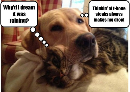 dogs drool dreaming Cats funny - 8291021312