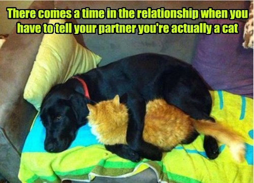 dogs,relationship,cute,love,Cats
