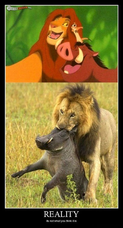 lions wtf lion king funny - 8291107328